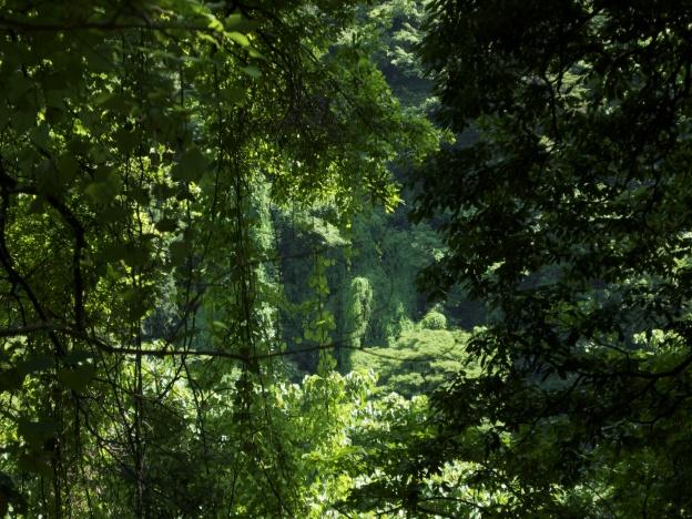 緑深まる高尾山