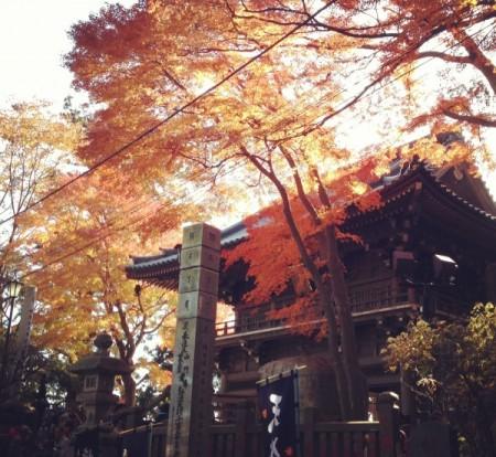 秋の薬王院