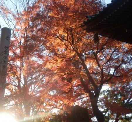 日の光と紅葉