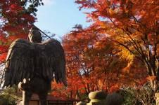 美しき秋の紅葉かおる高尾山!!!