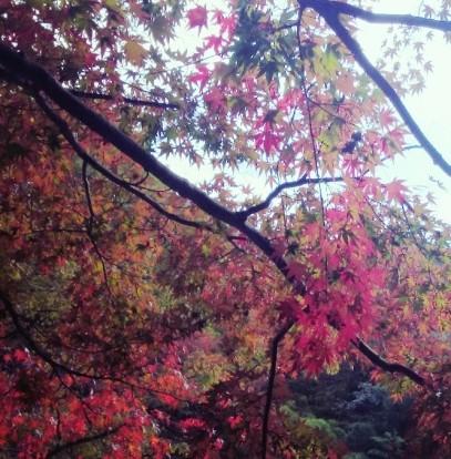 高尾山入口の紅葉☆