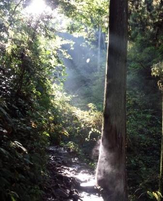 太陽と木の融合