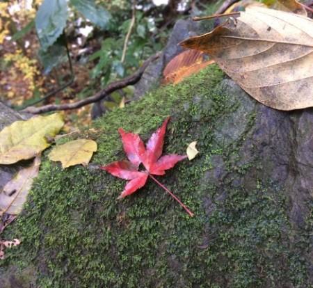 小さい秋発見!