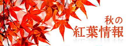 高尾山 秋の紅葉情報