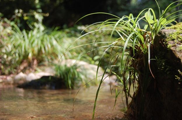 蛇滝コース03
