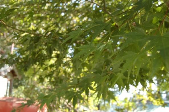 10月の高尾山の緑