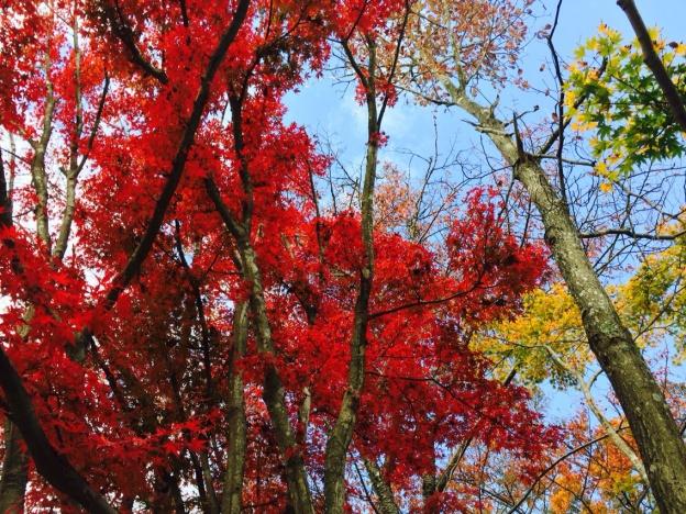 高尾山山頂紅葉