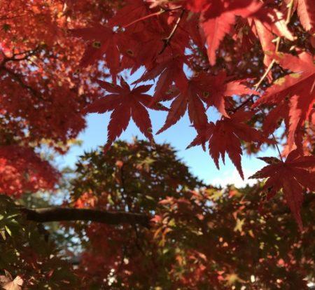 天晴れ紅葉