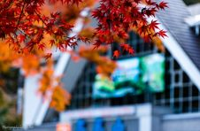 11月の高尾山の紅葉具合を写真でご紹介☆