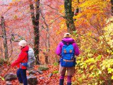 これから山登りをはじめたい人へ。高尾山厳選おすすめ登山リュック3選