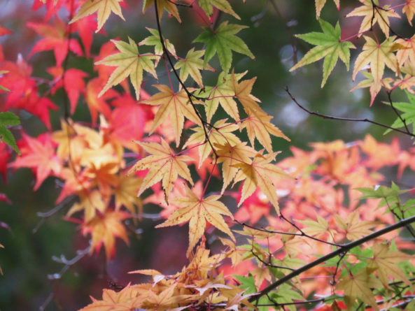紅葉の三色コラボレーション