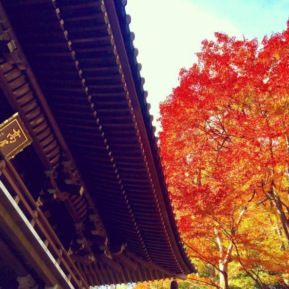 薬王院と紅葉