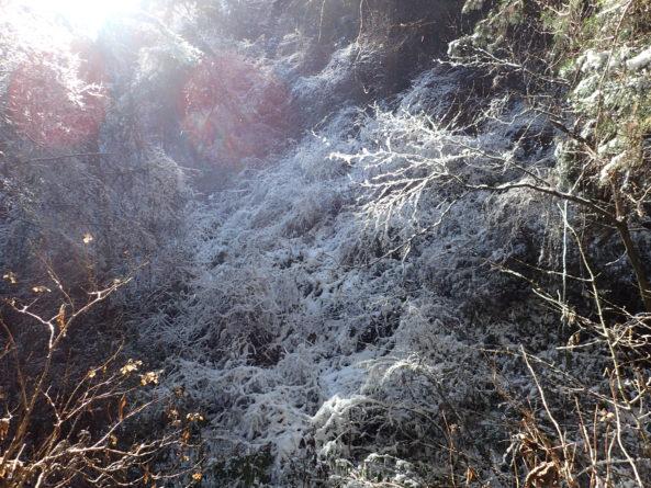 神々しい光と雪の木